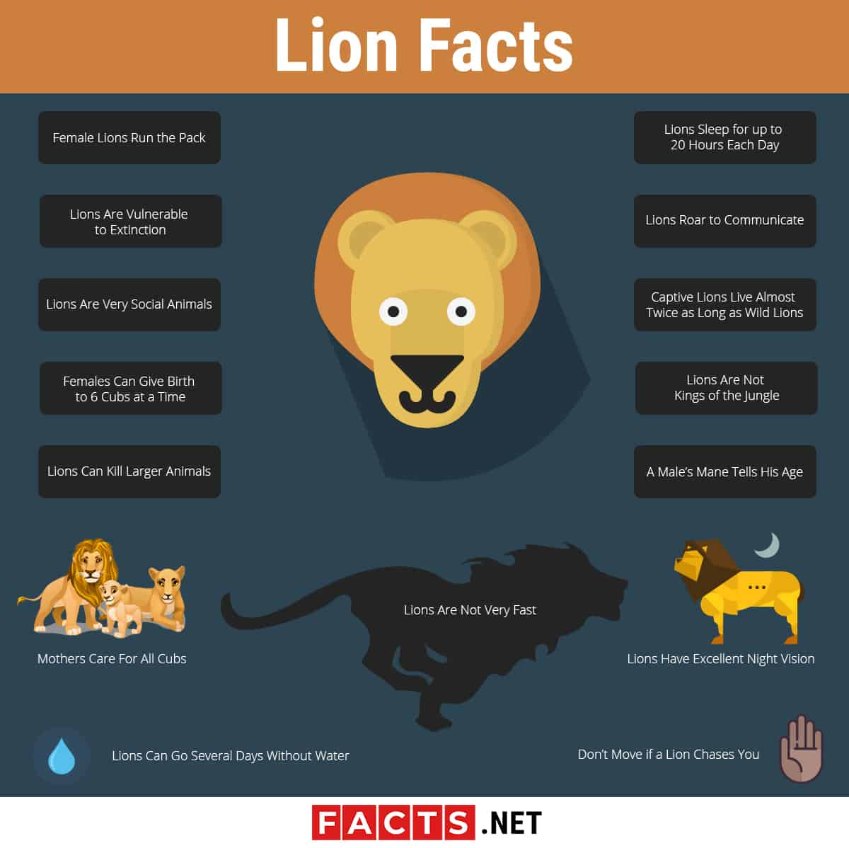 Lion Facts Infographics