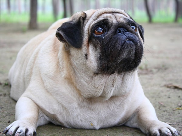 Obesity Now Affects Our Pets Too