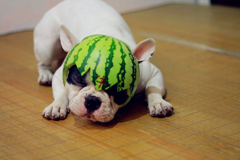 Watermelon-Is-a-Safe-Treat-for-Dog