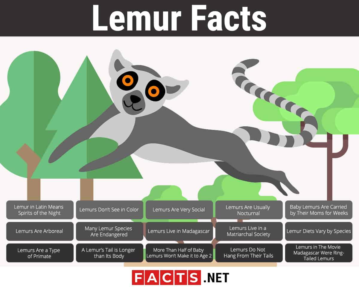 Lemur Facts Infographics