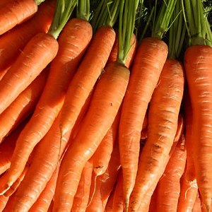 Carrot Facts