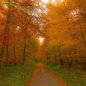 deciduous-forest-facts
