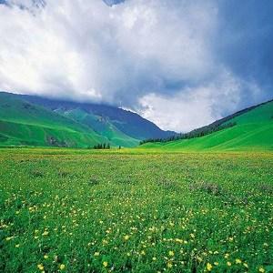 Grassland Facts