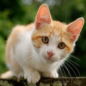 Kitten Facts