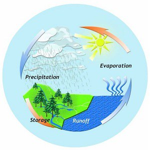 Water Cycle Facts