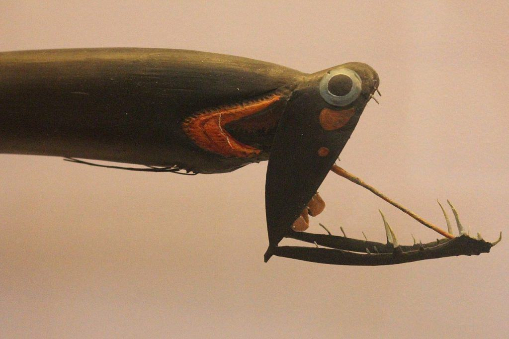 Stoplight Loosejaw, Deepsea Fish