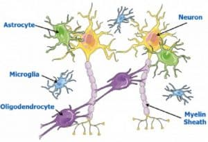 Brain-Cell-Types