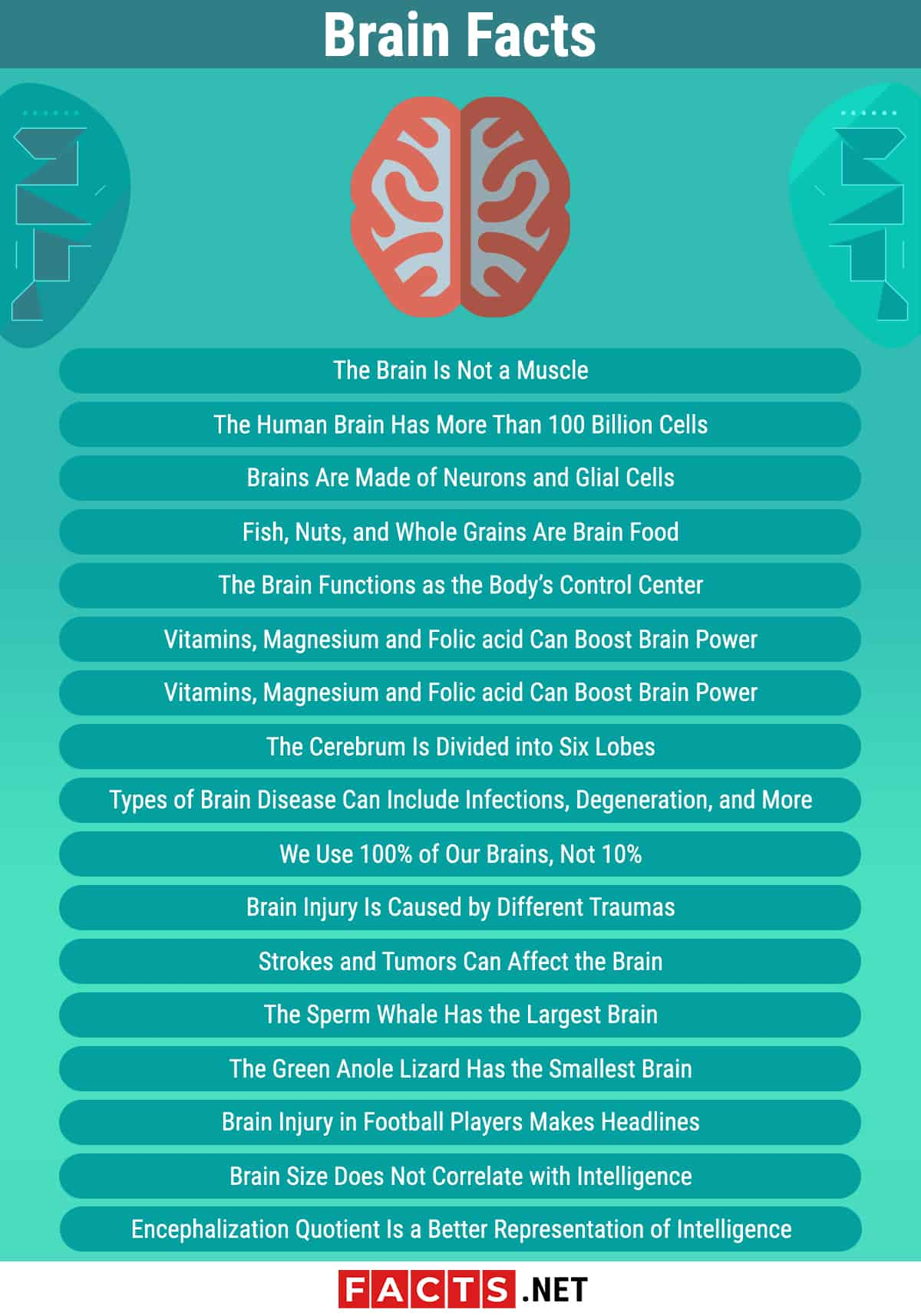Brain Facts Infographics