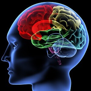 brain-facts