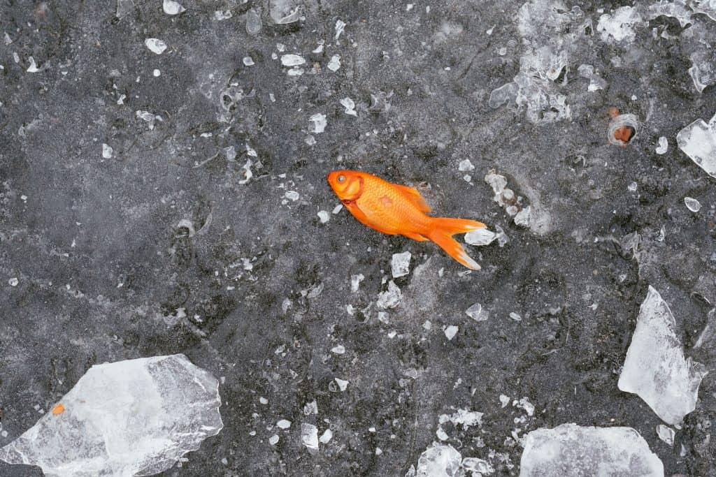 frozen fish weather facts