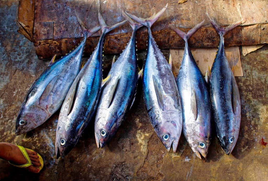 fish protein facts