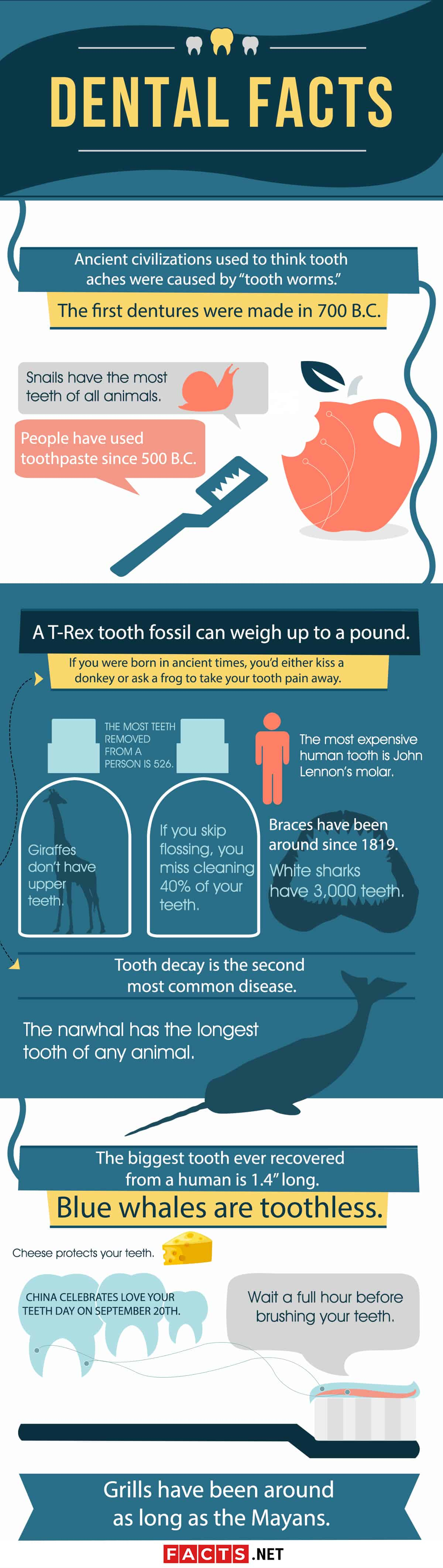 Dental Facts Infographics