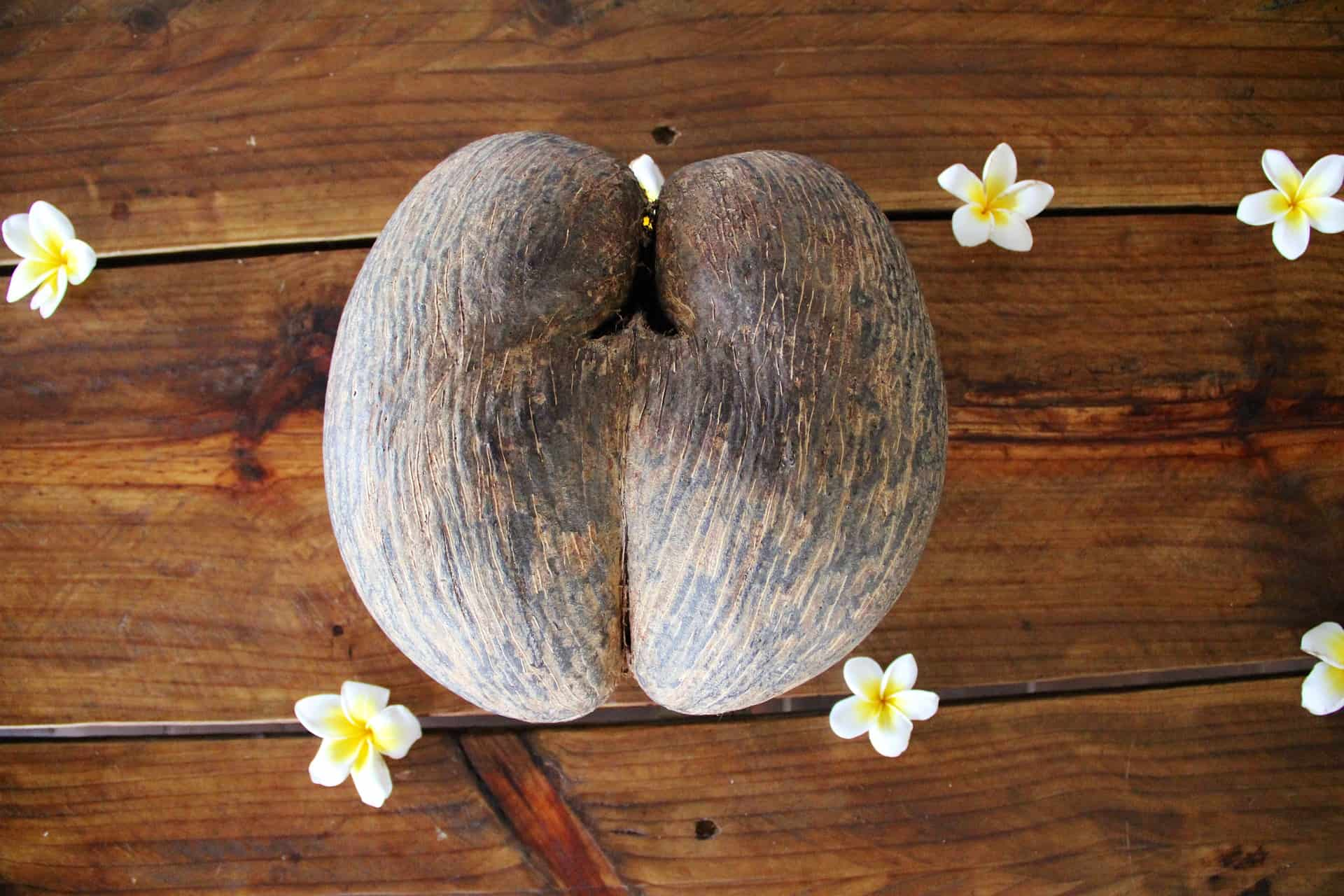 coco de mer, largest seed, plant facts