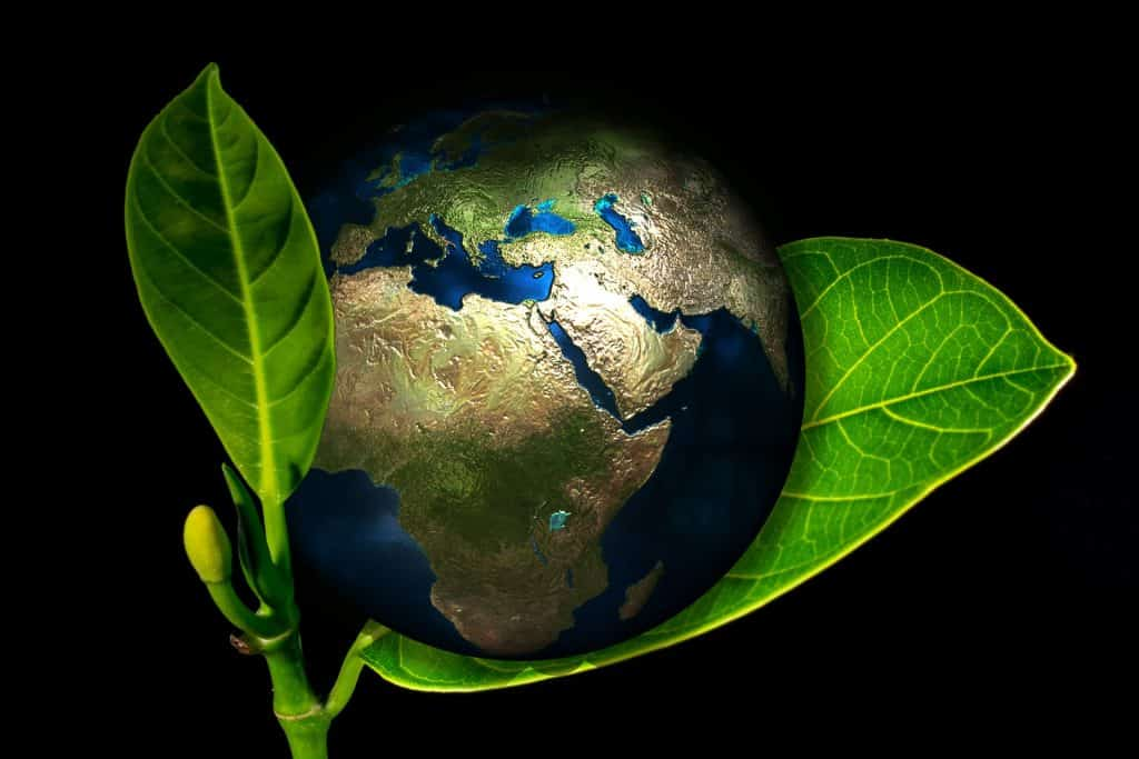 plant rich protect plant facts