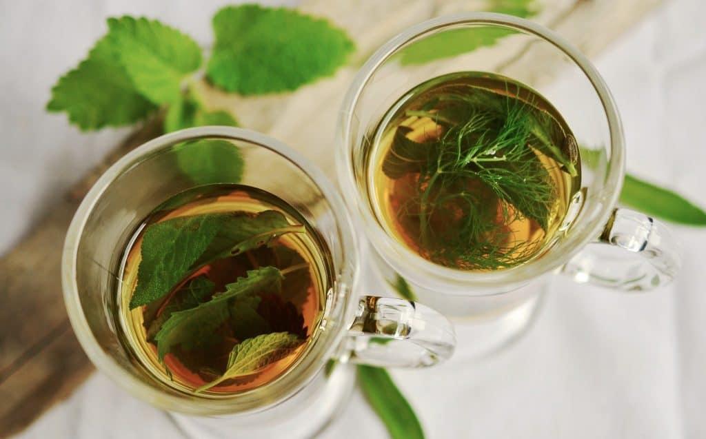 tea plant facts