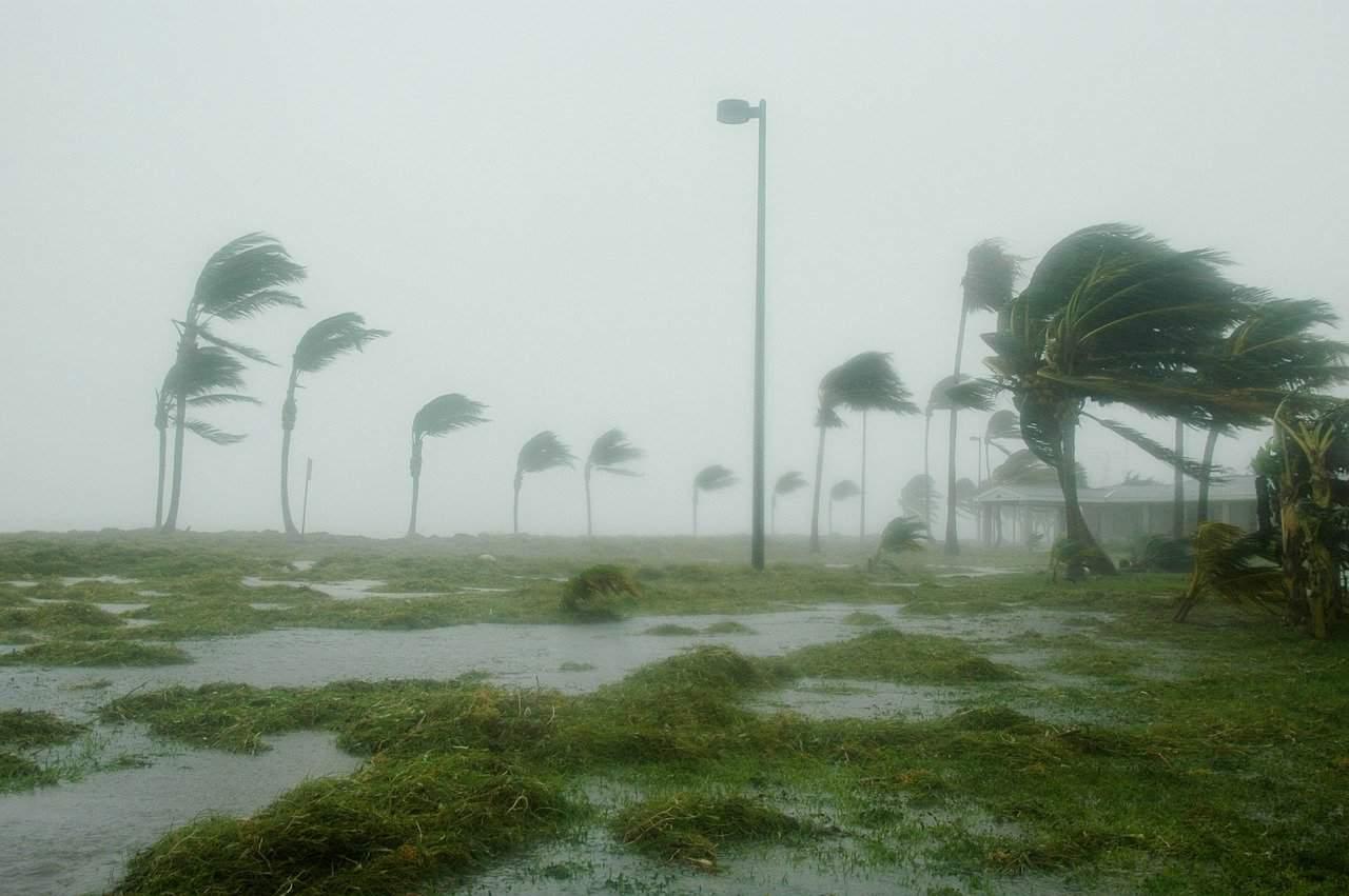 hurricane facts, hurricane, tree