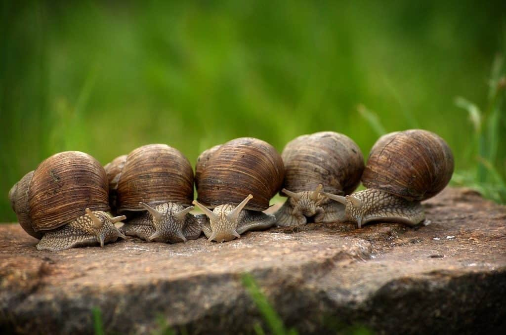 snail dental facts