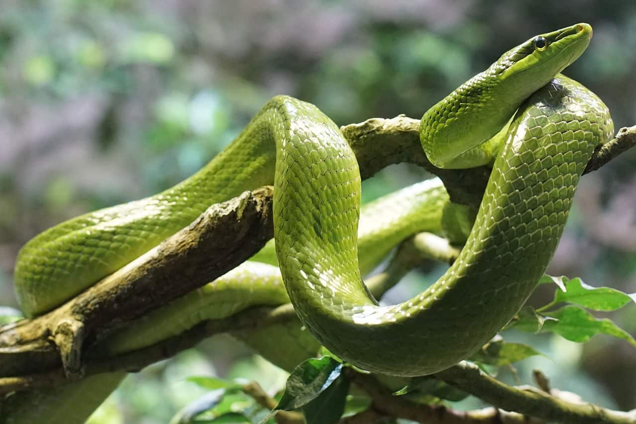 snake stores sperm for 5 years, sex facts