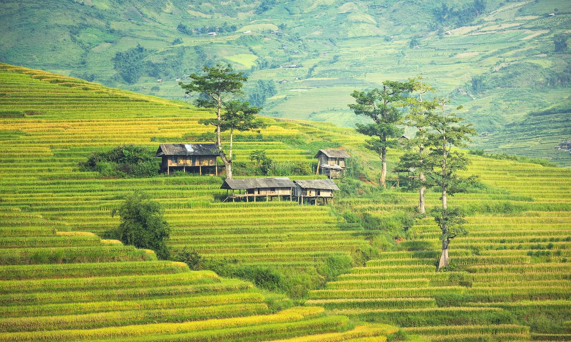 thailand agriculture, thailand facts
