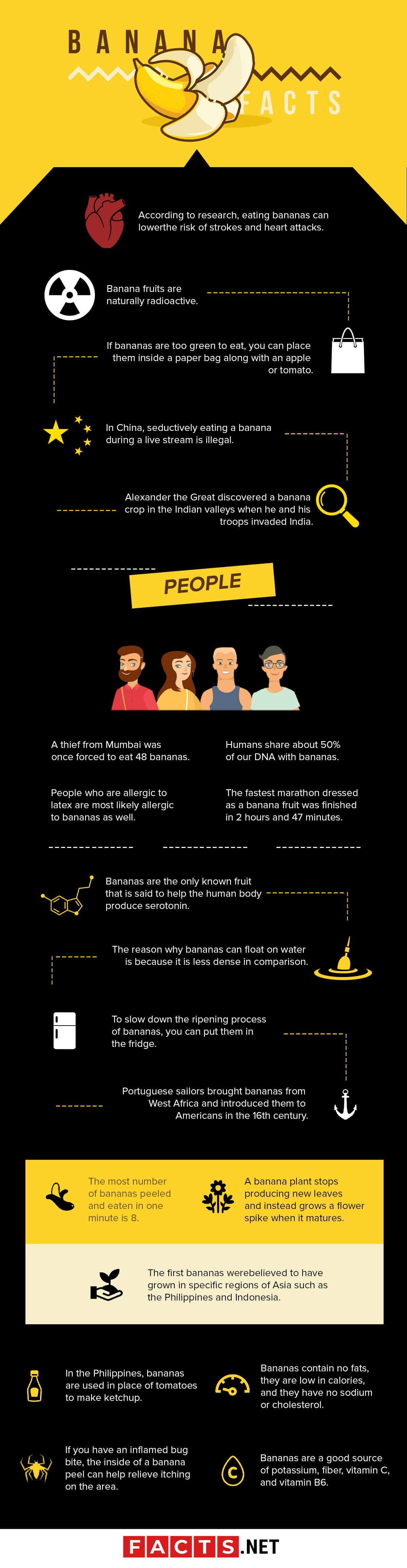 Banana Facts Infographics