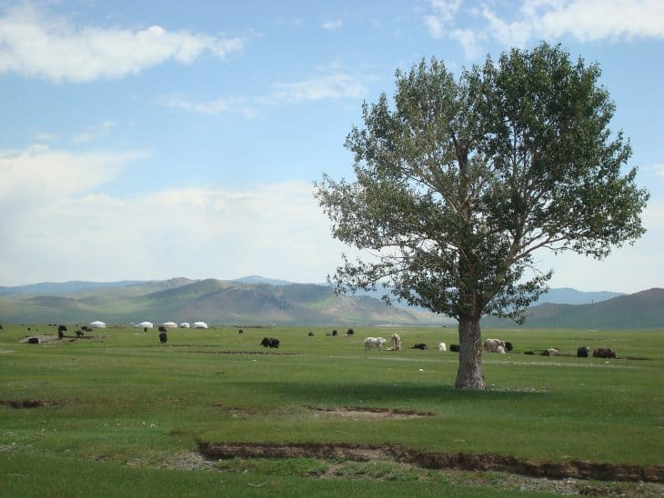 A pasture in Mongolia with grazing animals in the foreground and tents in the background.