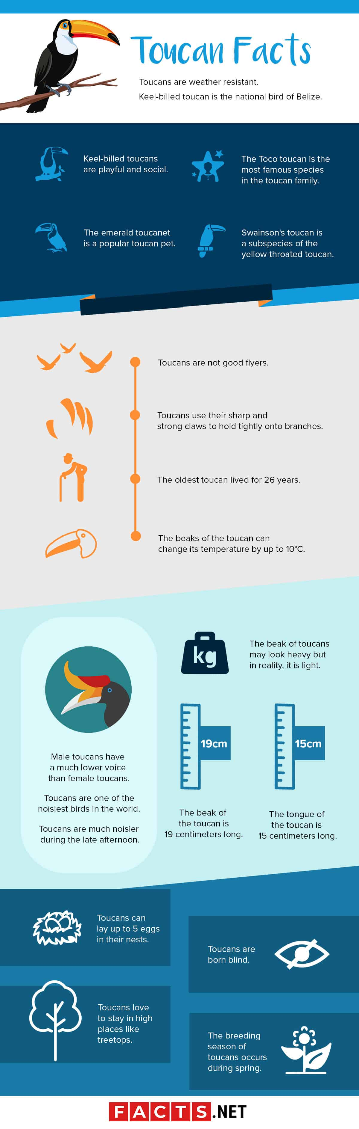 toucan facts infographics