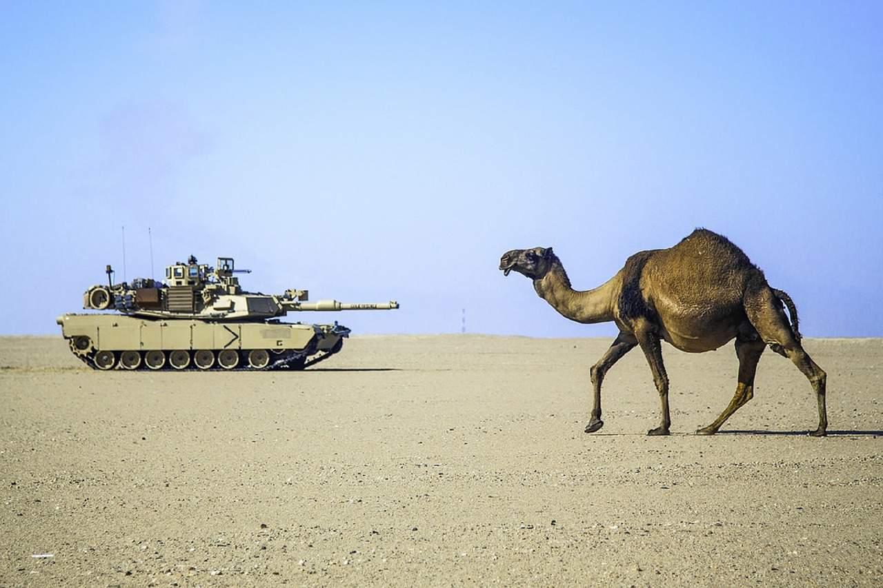 camel in wars