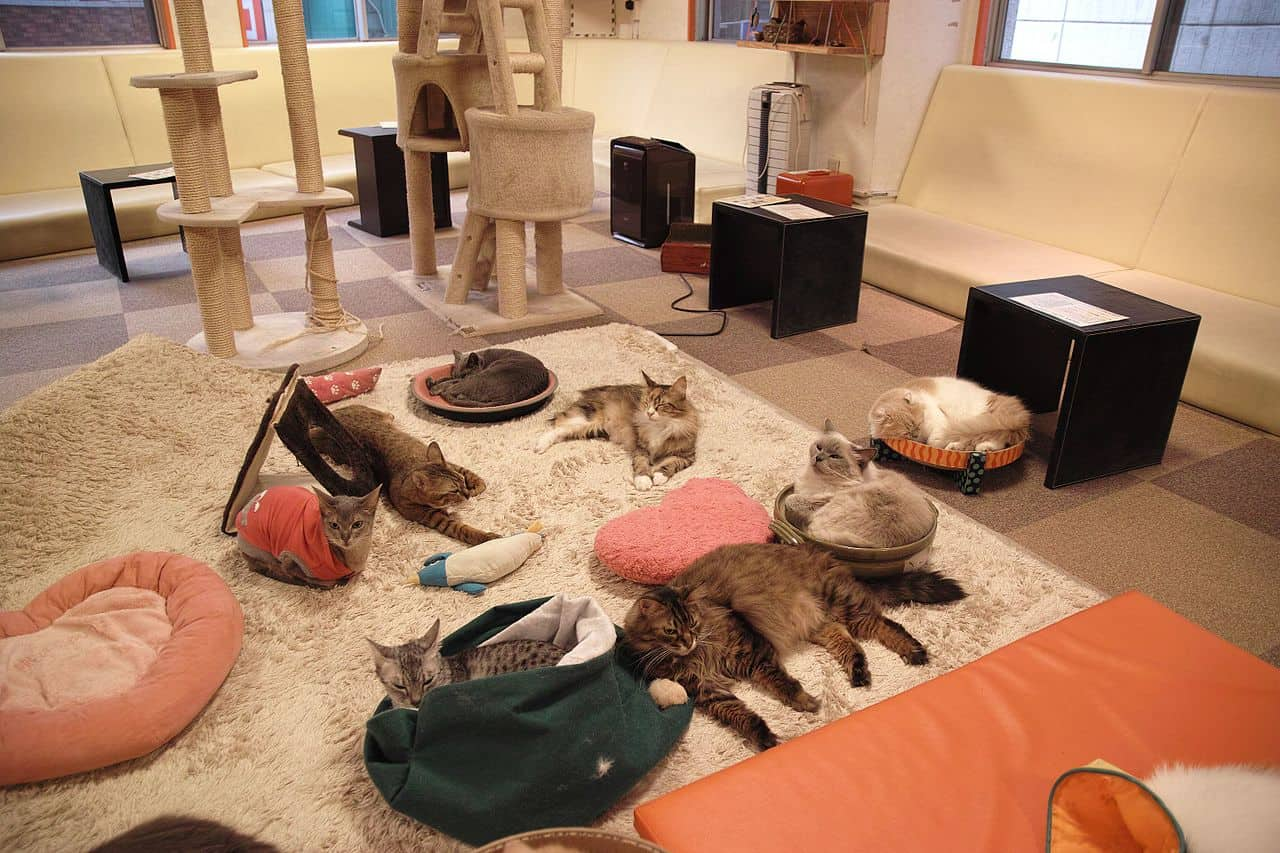 cat cafe in tokyo, tokyo facts