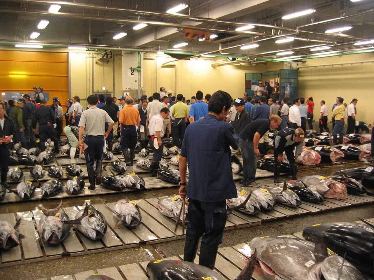 fresh tuna auction, tsukiji market, tokyo