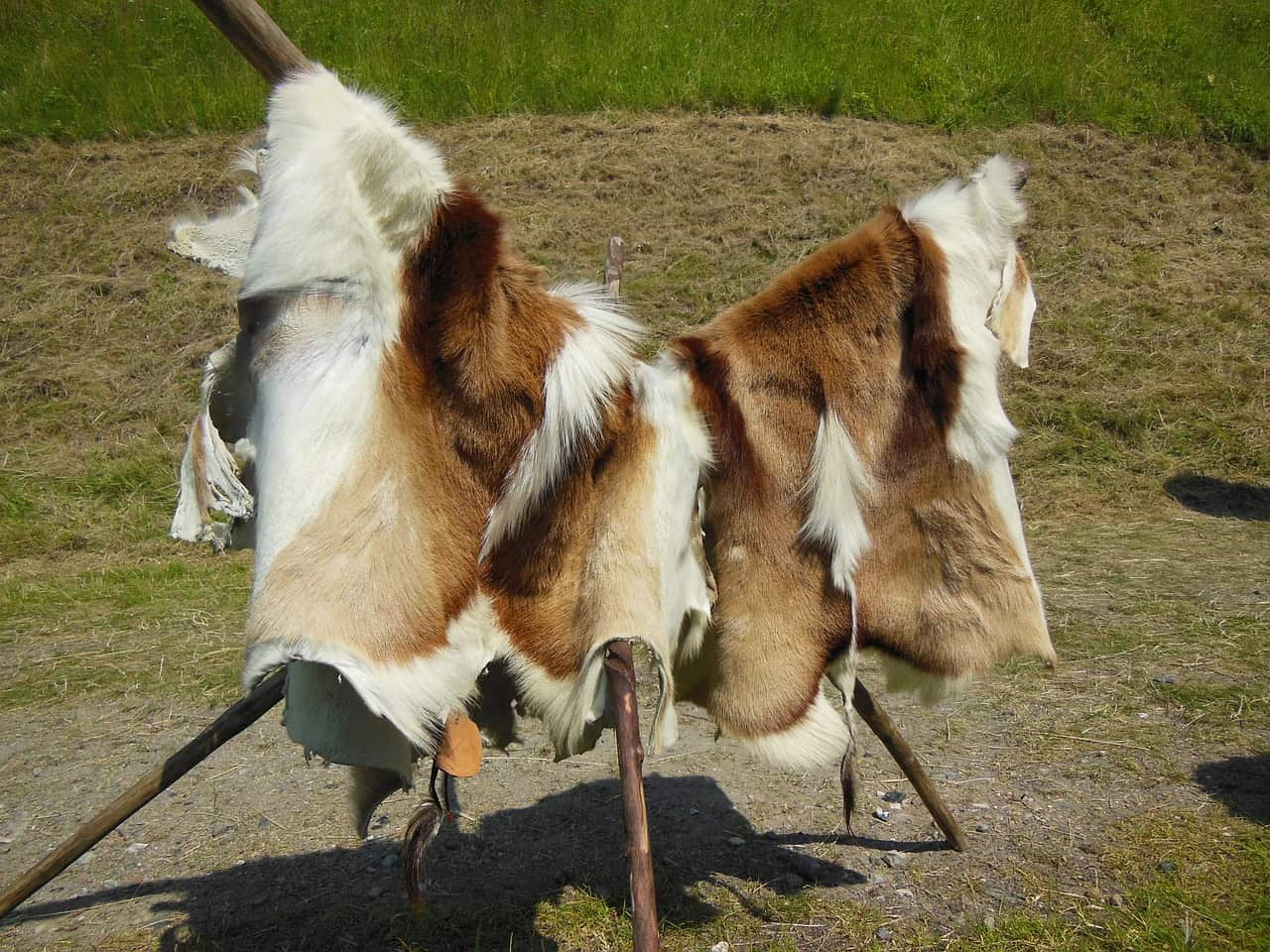 fur trade in Montana, montana facts