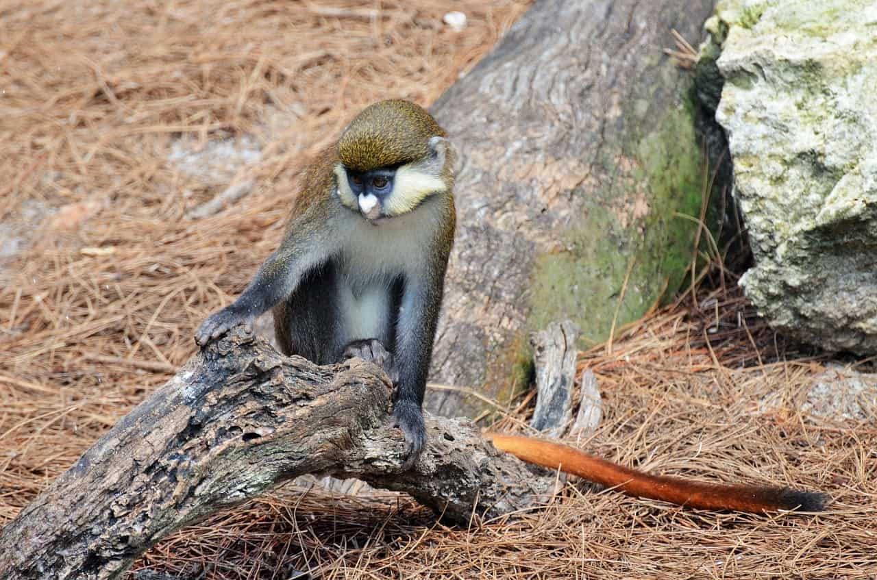 monkey, tree, monkey facts