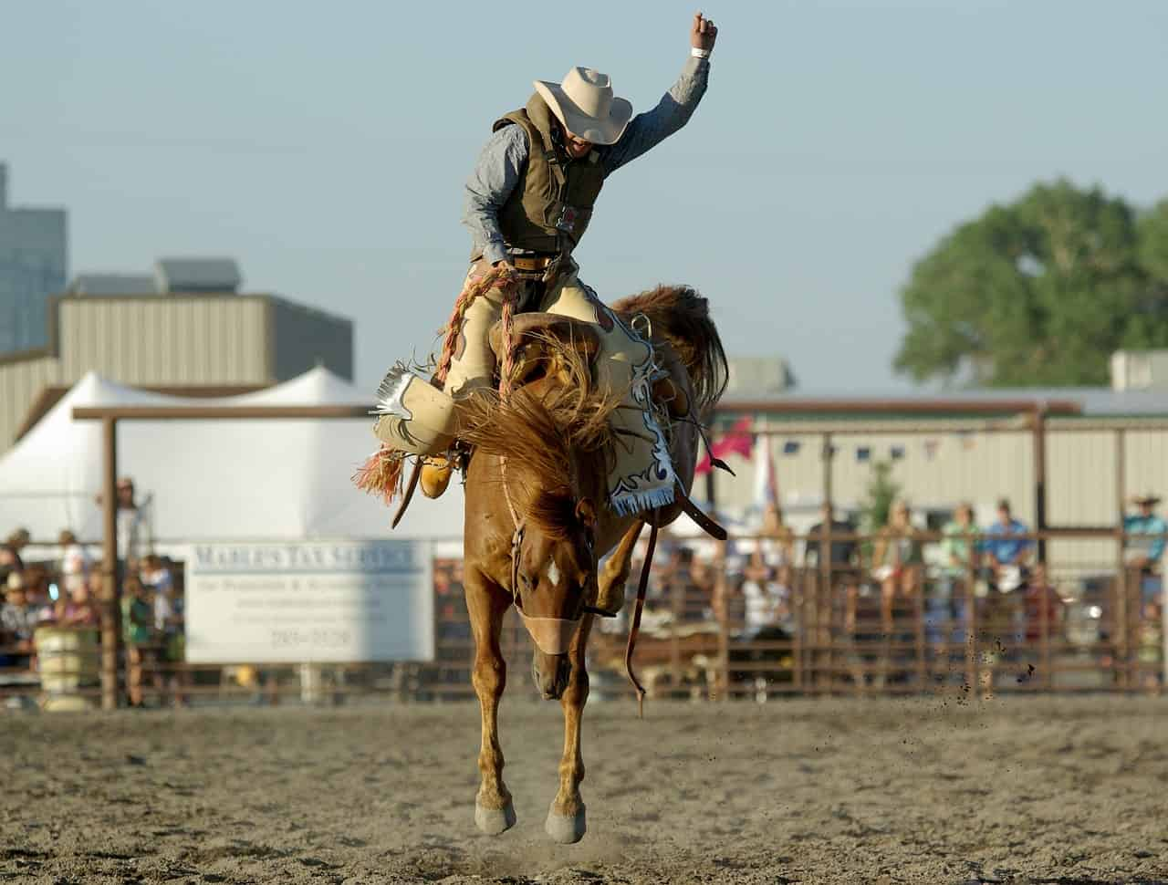 traditional rodeo in montana, montana facts