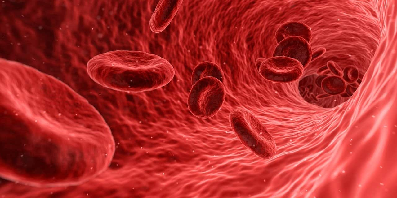 red blood cells, blood, human body facts
