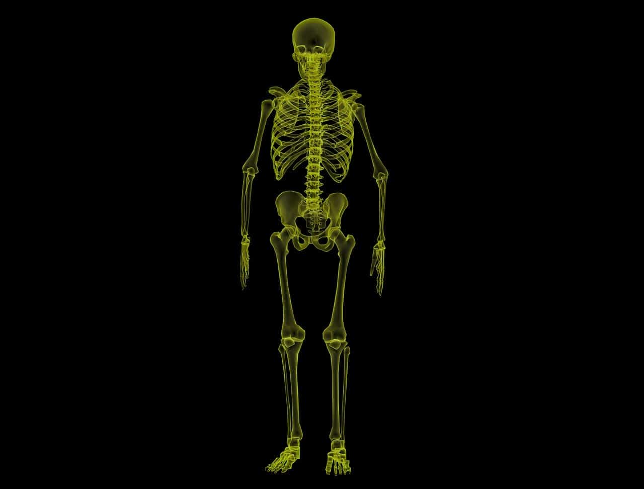 human skeleton, human body facts