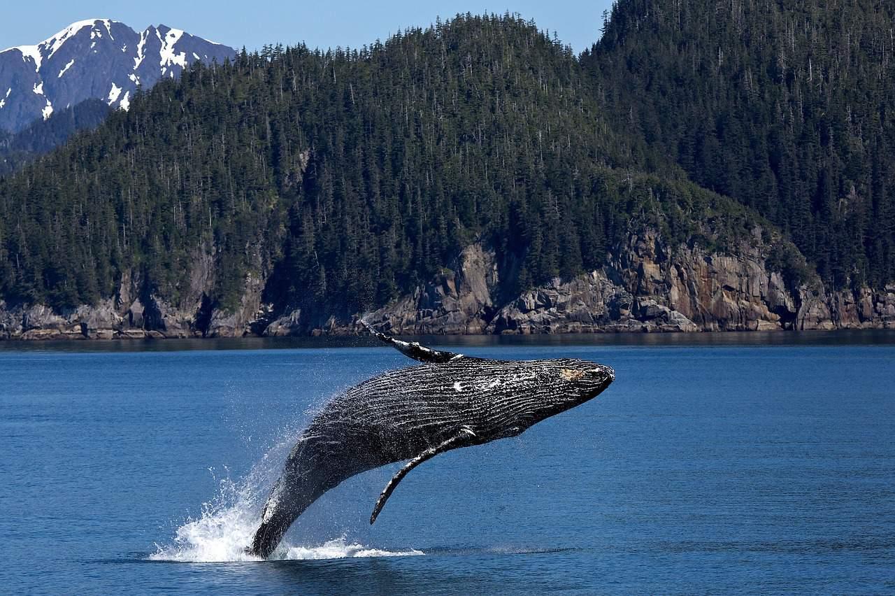 whale, alaska, alaska facts