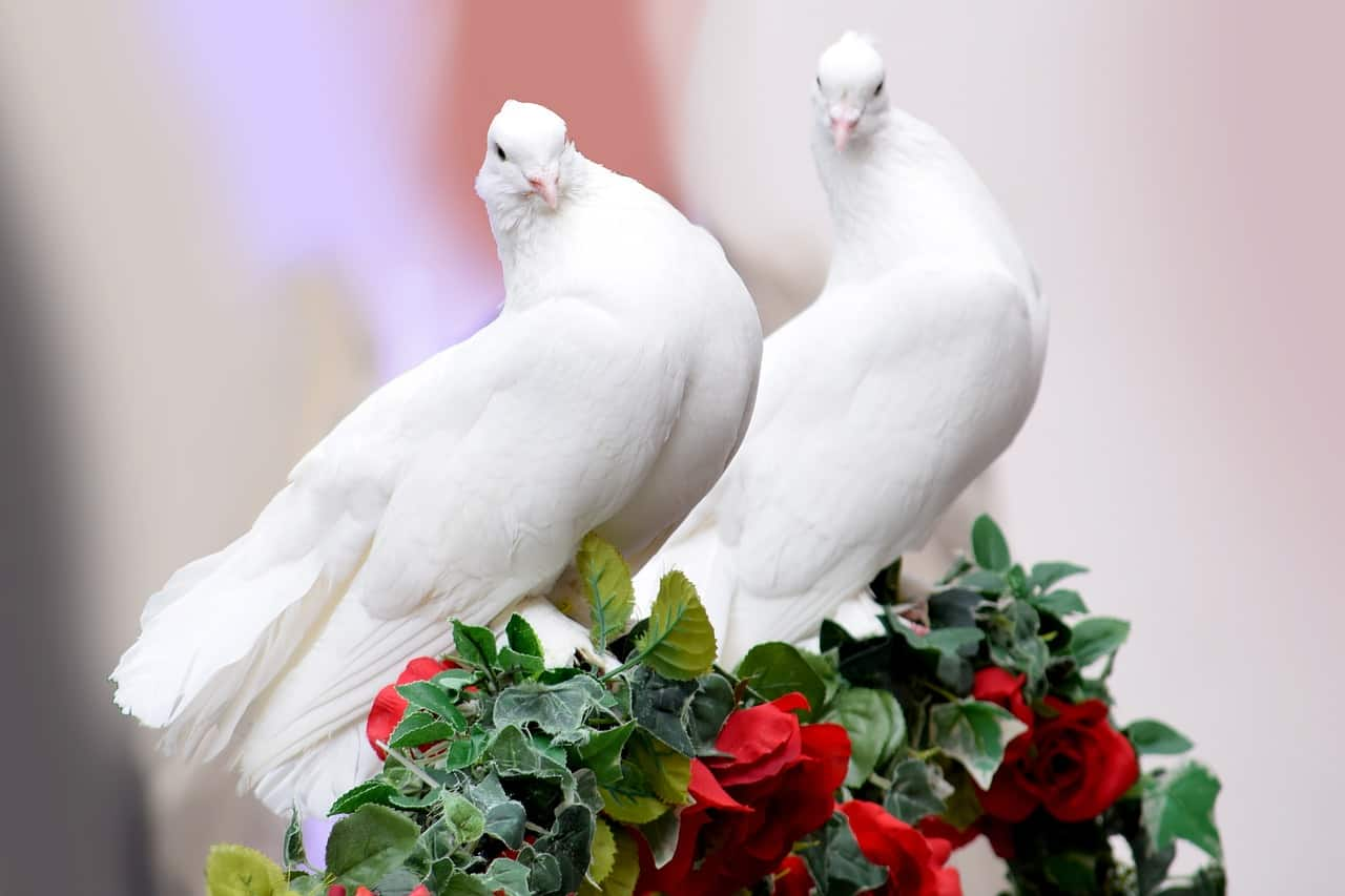 love doves, valentine's day facts