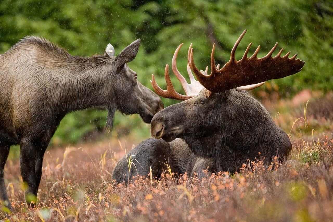 moose, alaska, alaska facts