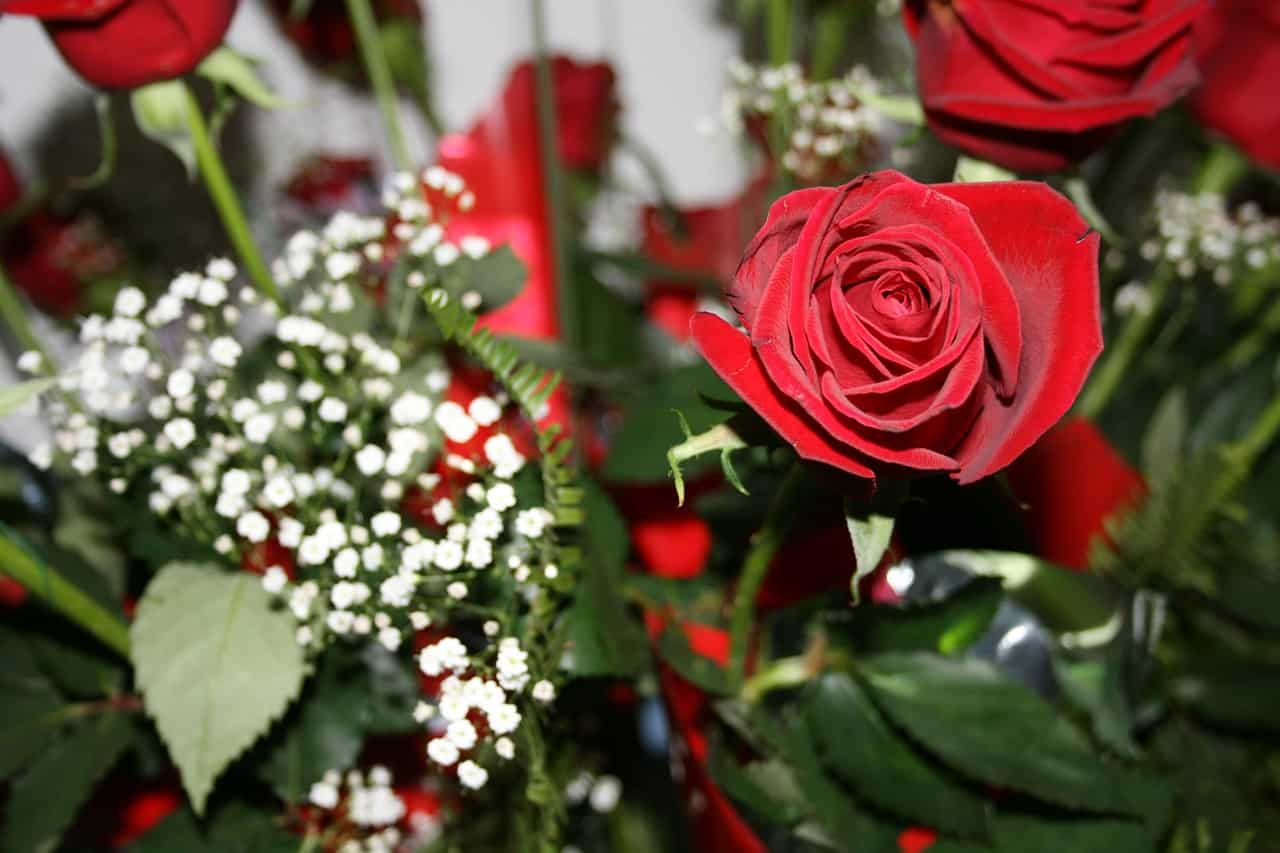red rose and baby's breaths, valentine's day facts
