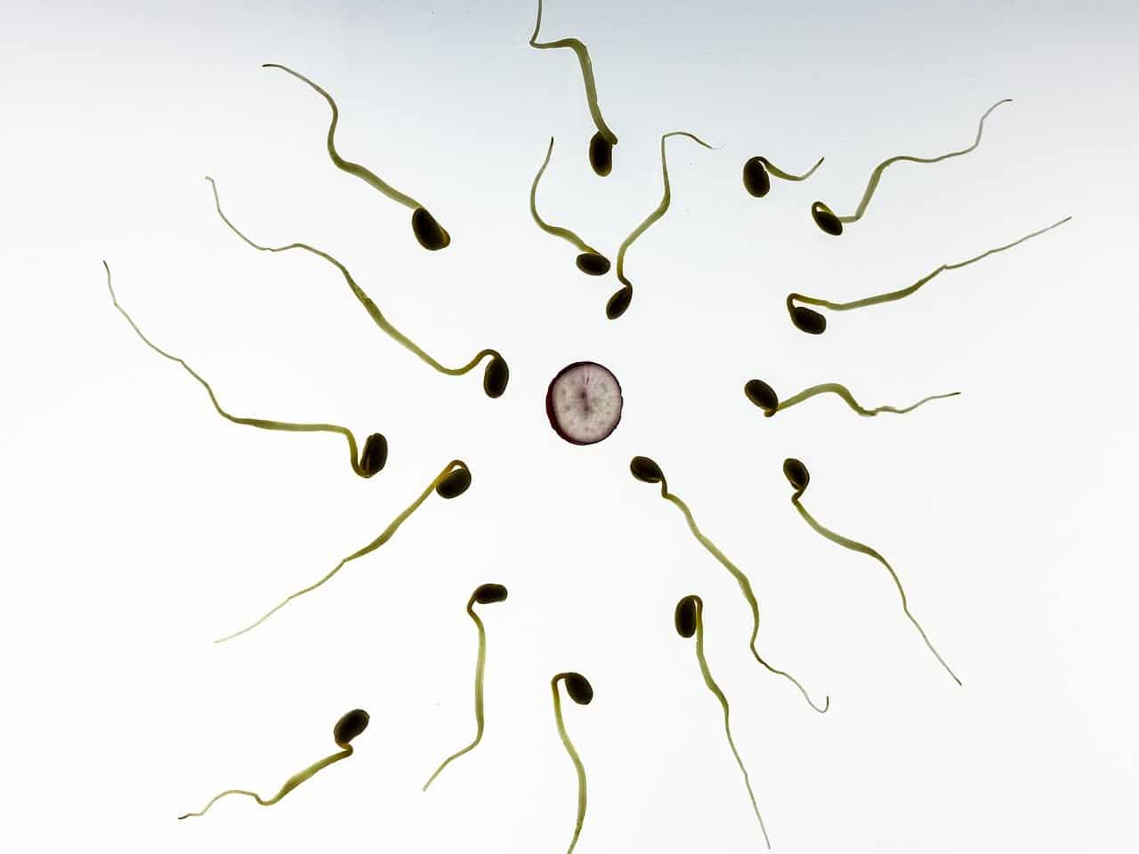 sperm and egg, reproduction, human body facts