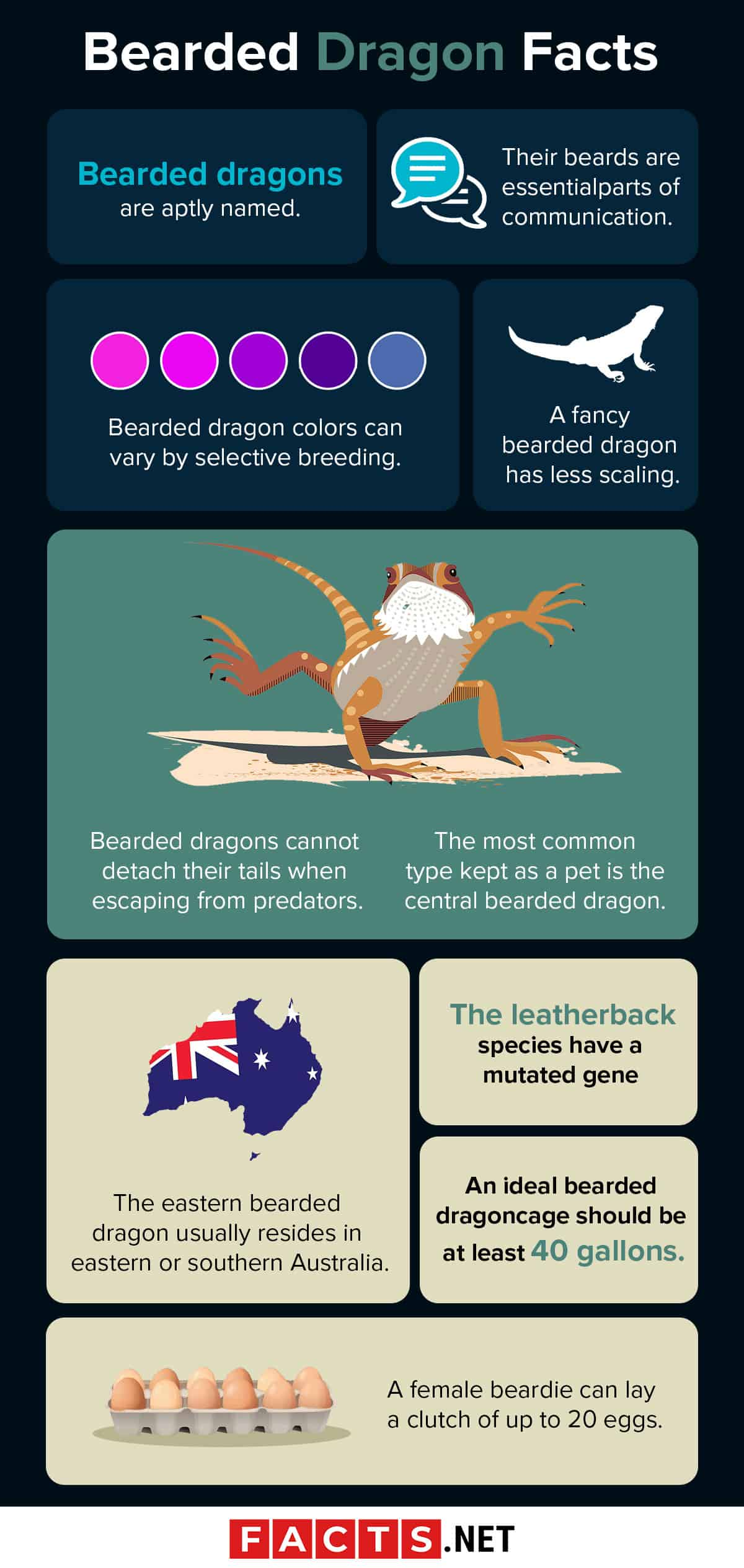 Bearded Dragon Facts Infographics