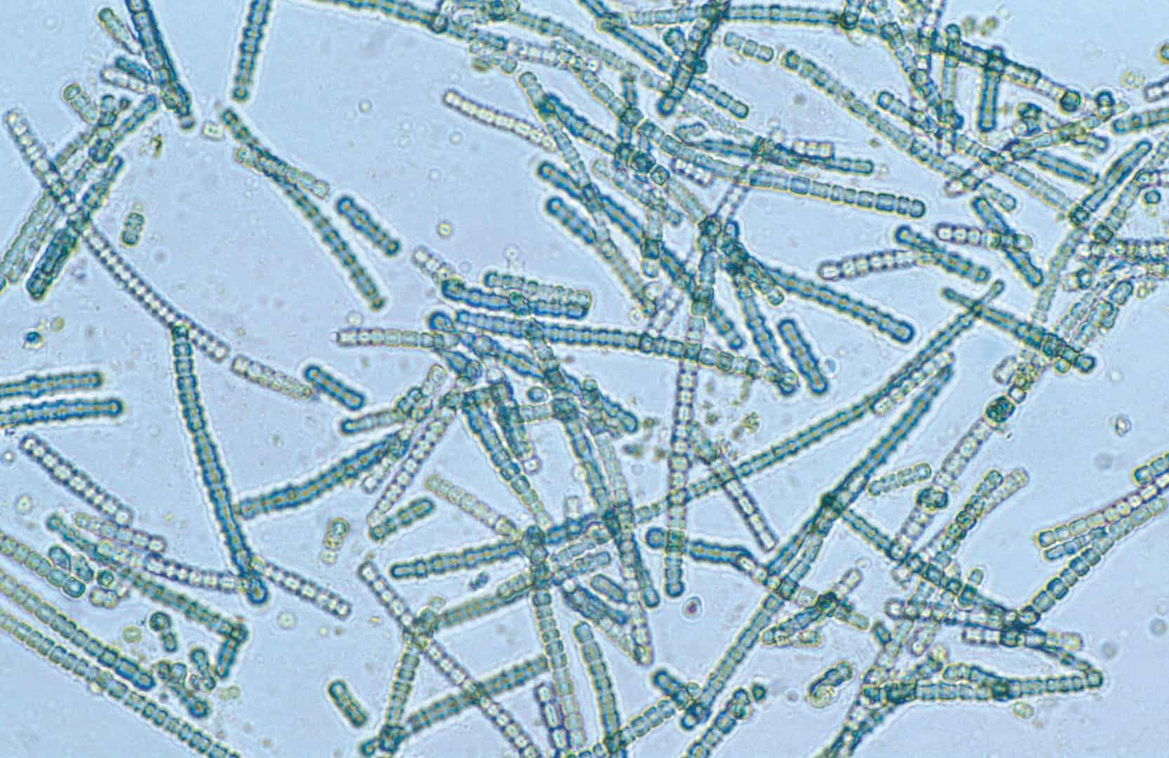bacteria, earth facts