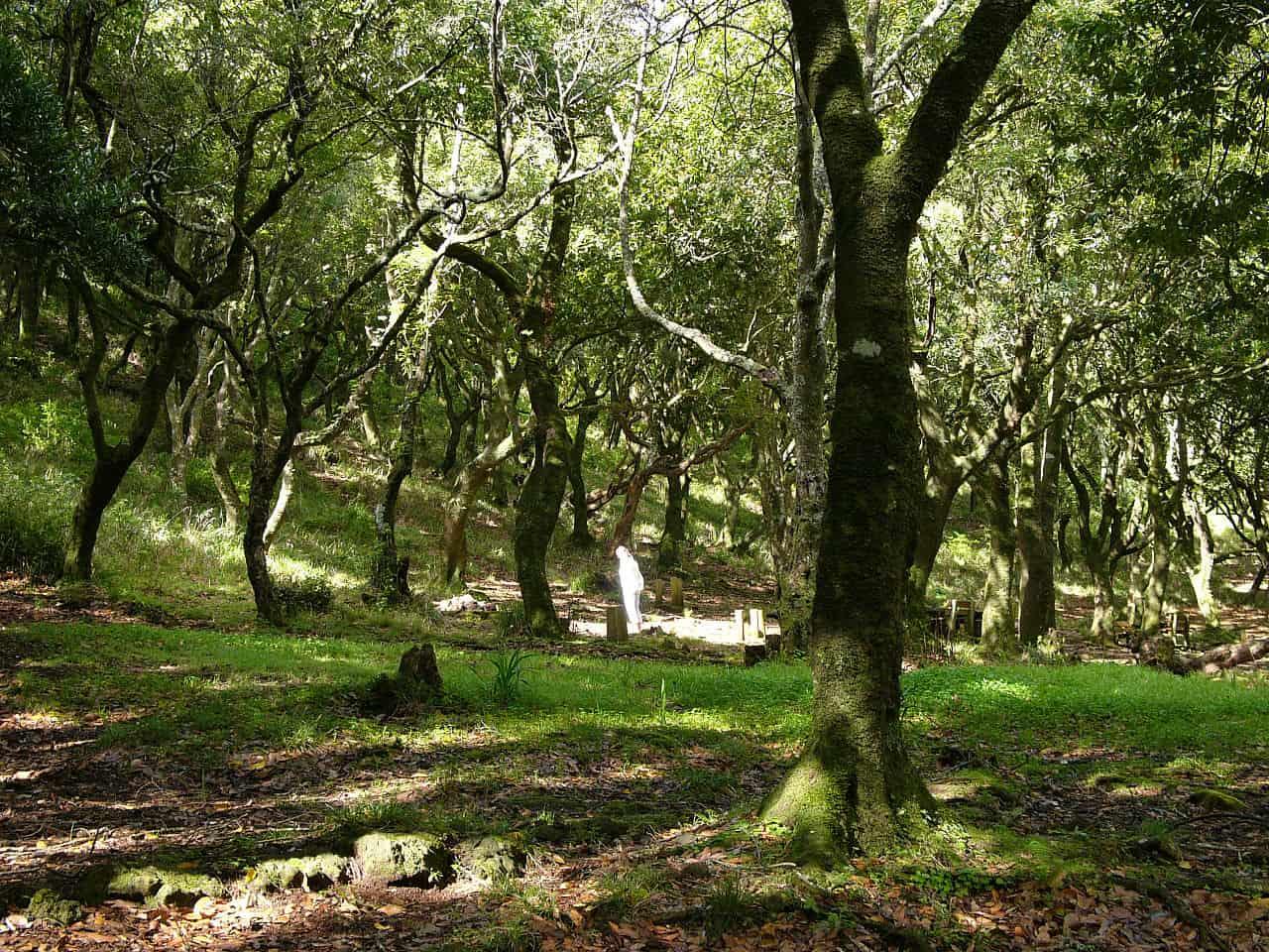 laurel wood, nobel prize