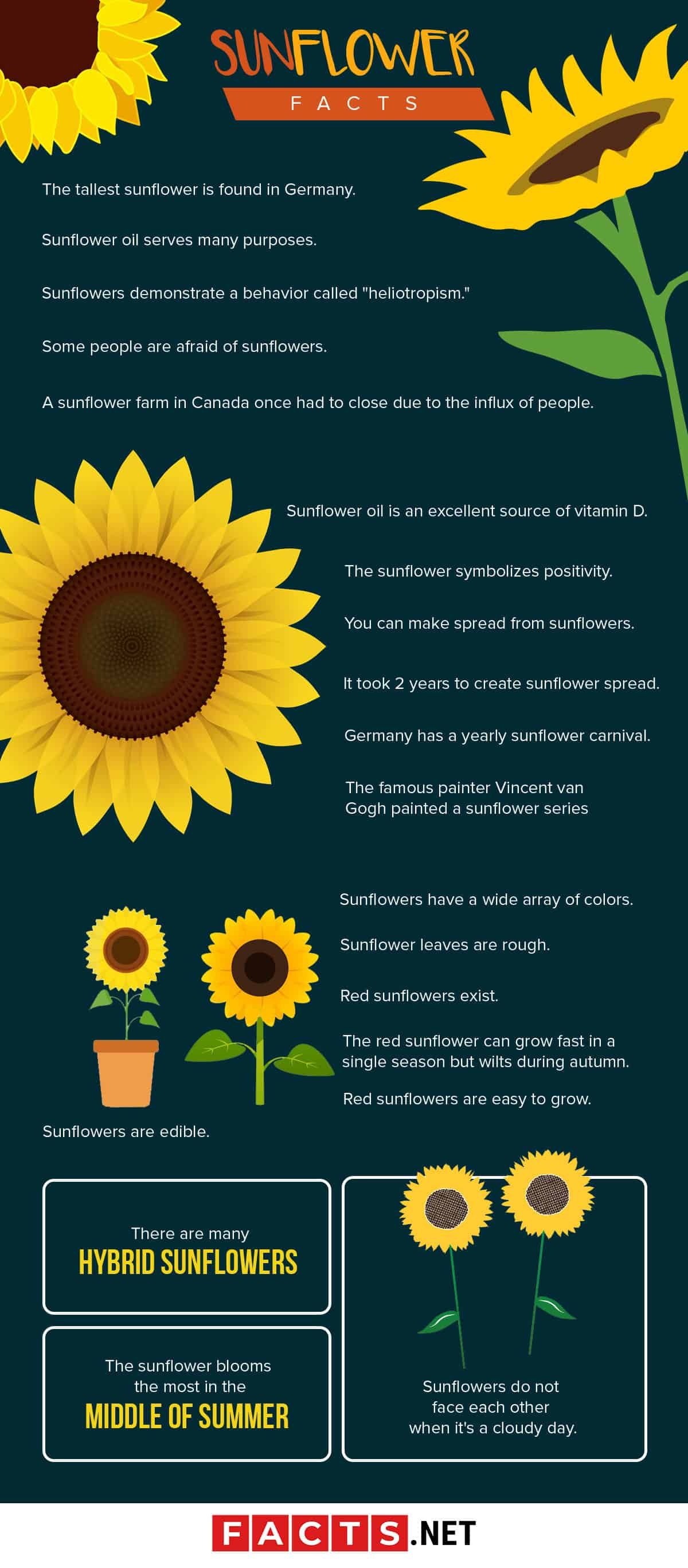Sunflower Facts Infographics
