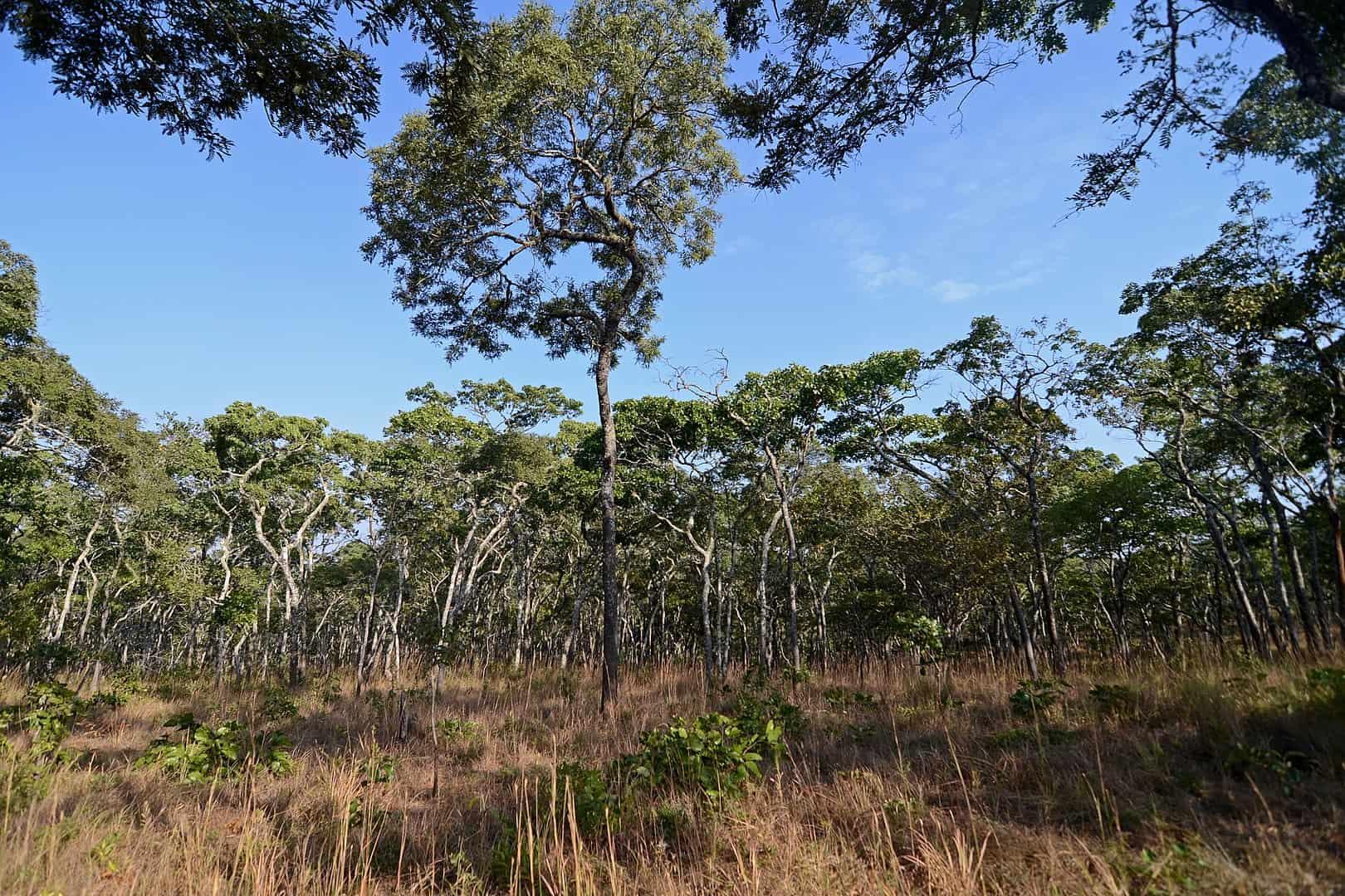 tropical savannah, earth facts
