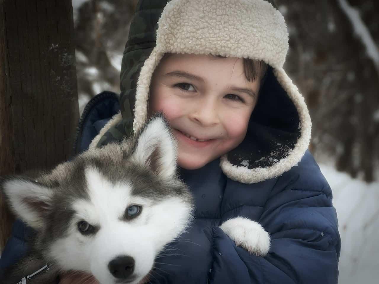 husky, child, siberian husky facts