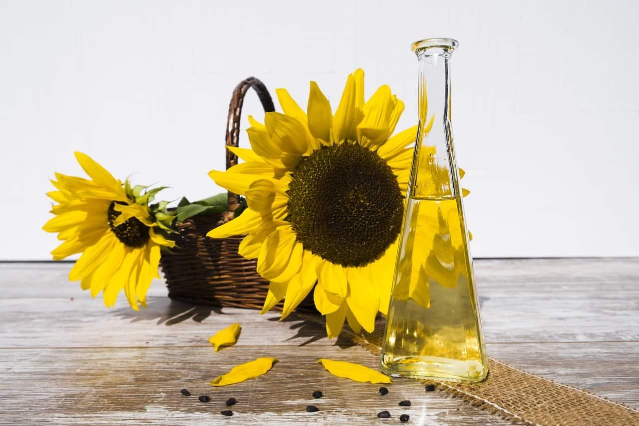 sunflower oil, sunflower facts