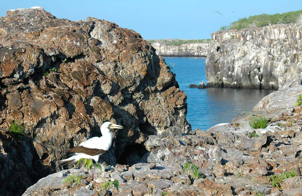 bird, galapagos islands facts