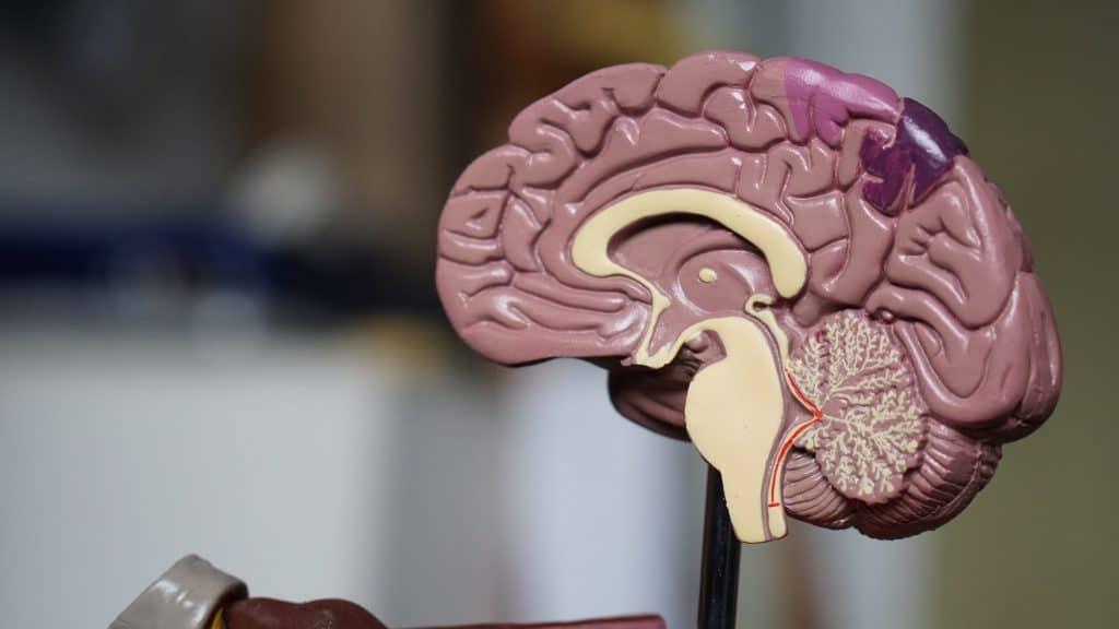 famous scientists einstein brain