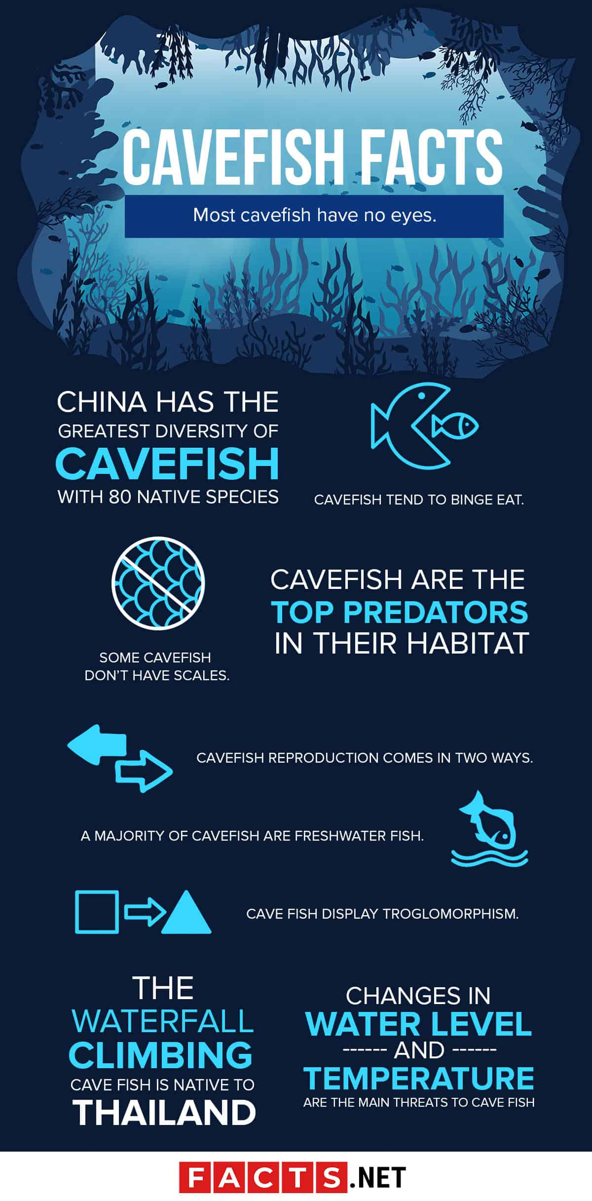 Cavefish facts infographics