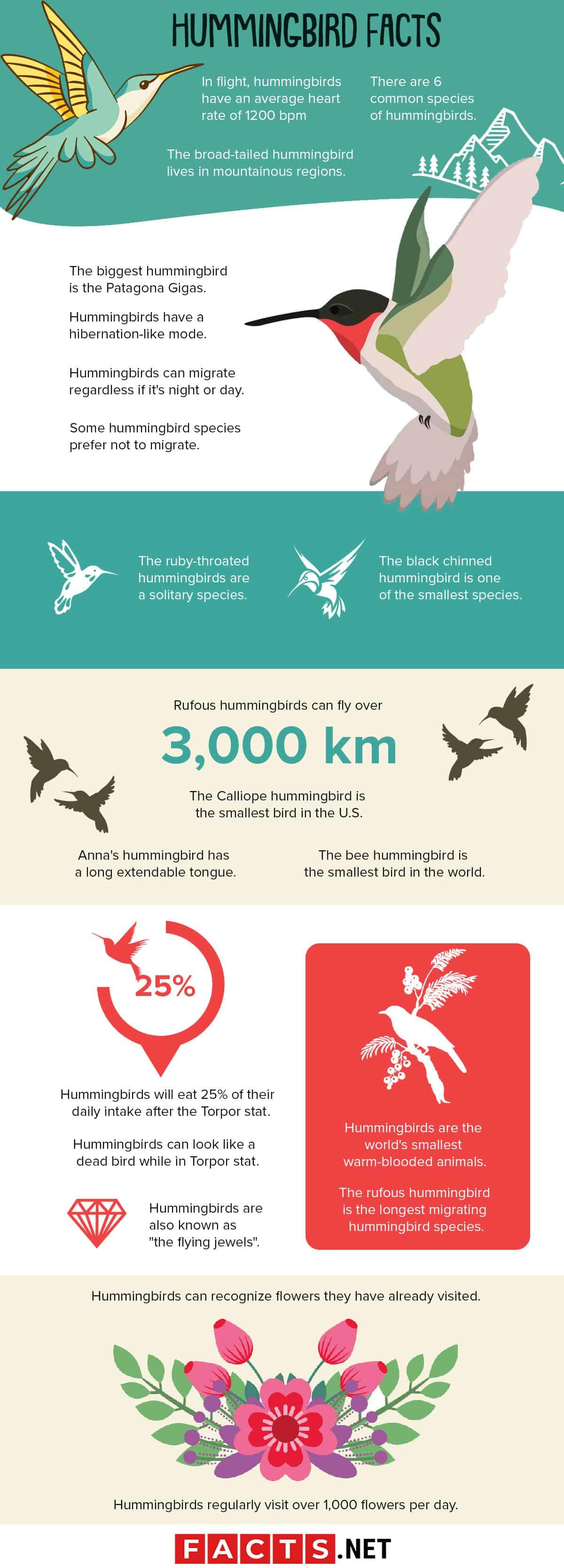 Hummingbird Facts Infographics